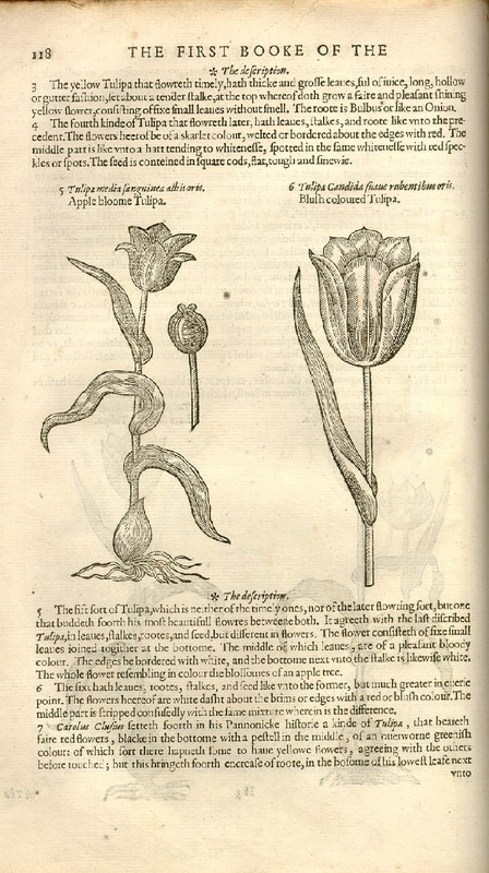 The Herball Or Generall Historie of Plantes